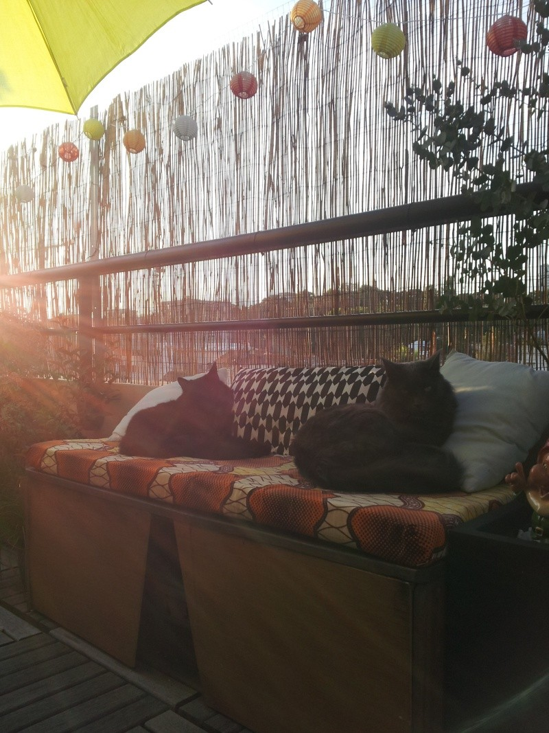 HELIO (Whiskas) et NEL (Giddy) - Page 4 20150810