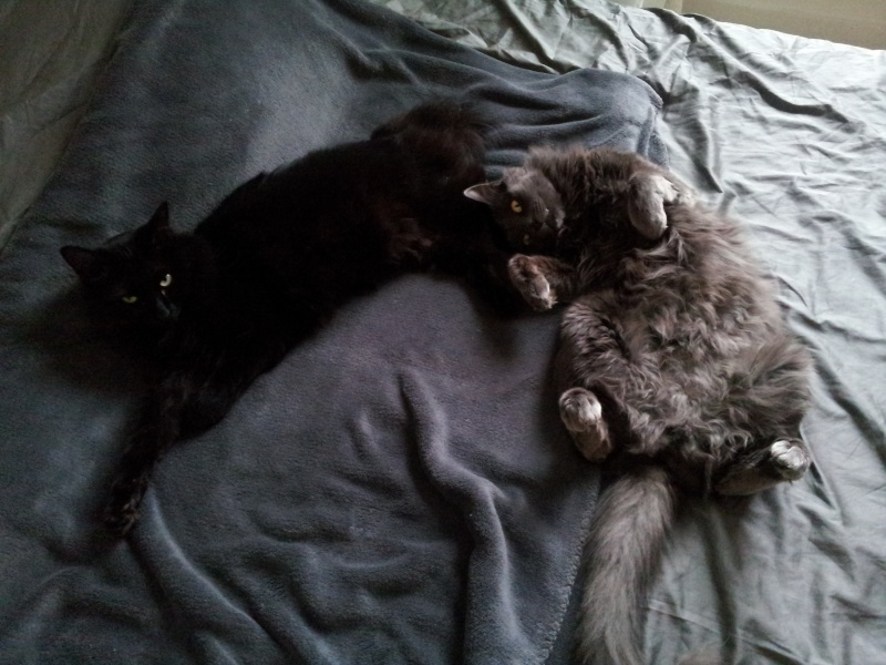 HELIO (Whiskas) et NEL (Giddy) - Page 4 20150812