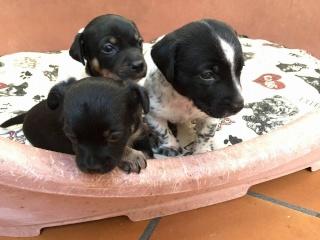 [Adoptés en Espagne] FABIA (F), DENVER (M) ET DENIS (M) : 12144710