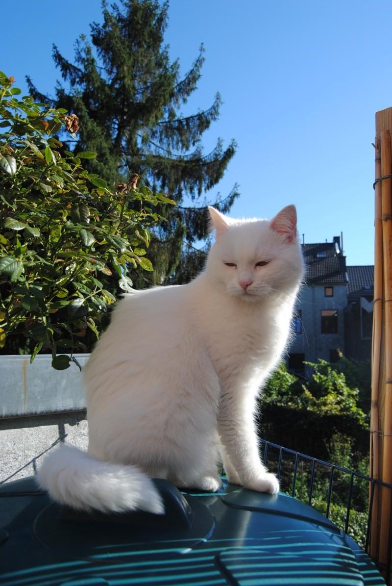 PRINCESSE, chatte née en 2010 env. (CARMINA) En FA chez Yas.h (Belgique) Dsc_0010