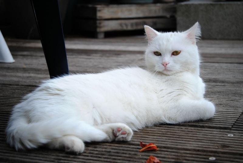 PRINCESSE, chatte née en 2010 env. (CARMINA) En FA chez Yas.h (Belgique) - Page 2 Dsc_0011