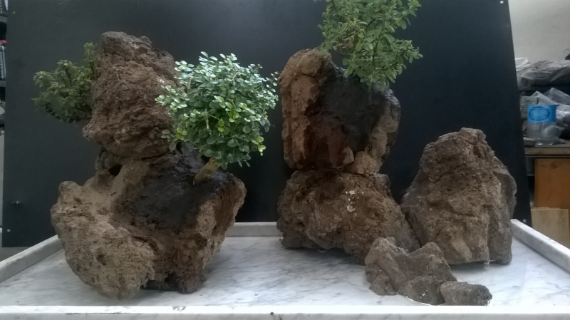 Penjing- landscape ...........work in progress Wp_20115