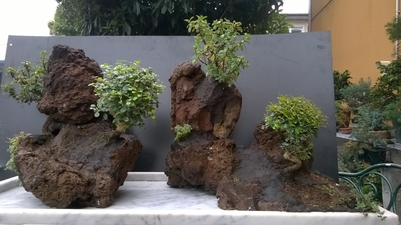 Penjing- landscape ...........work in progress Wp_20118