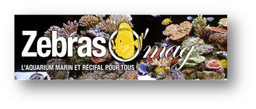 Bourse Aquariophile de Bordeaux 2015 Zebraz10