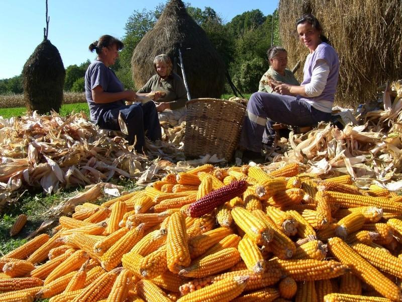 Agrar & selo u sjeni prošlosti 12079810