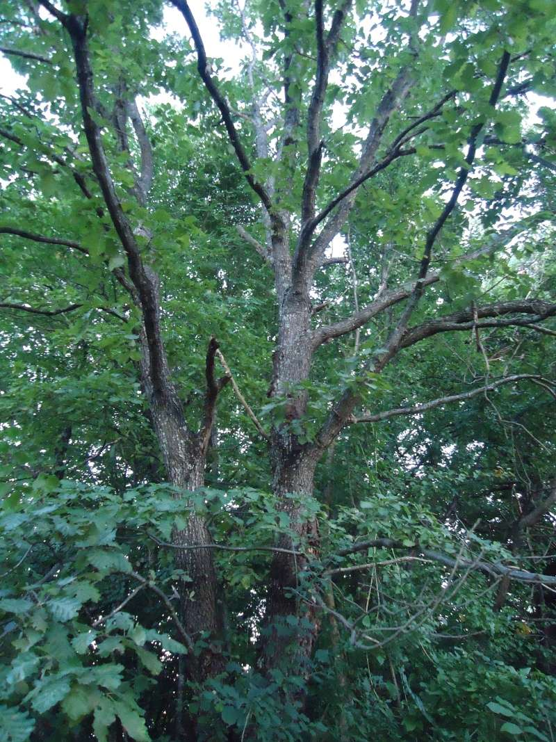 Listopadne šume Dsc09210