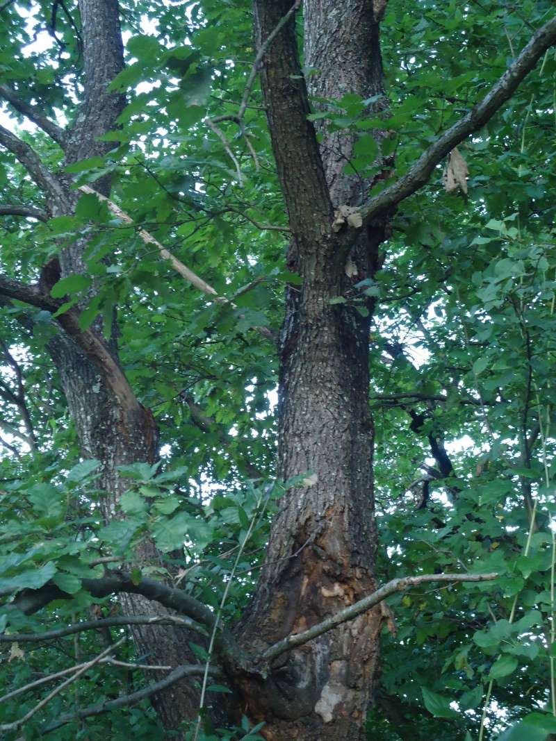 Listopadne šume Dsc09212