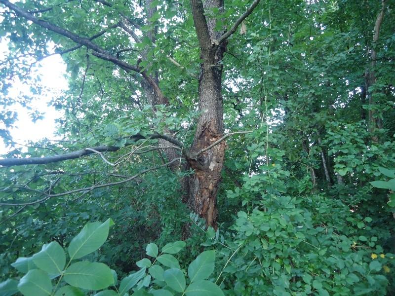 Listopadne šume Dsc09216