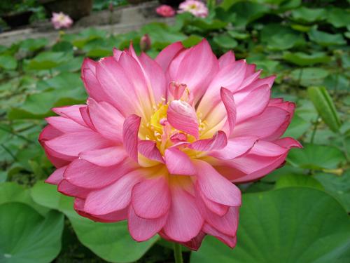 bassin de jardin 8000L - Page 6 Momobo10