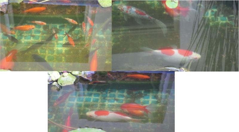 bassin de jardin 8000L - Page 6 Sam_1616