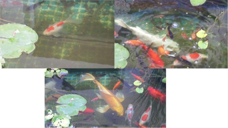 bassin de jardin 8000L - Page 6 Sam_1617