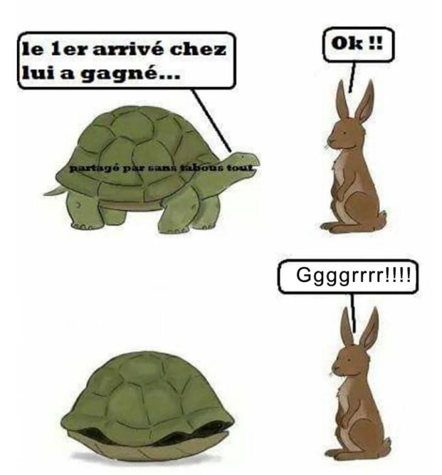 Humour du jour - Page 6 Tortue10