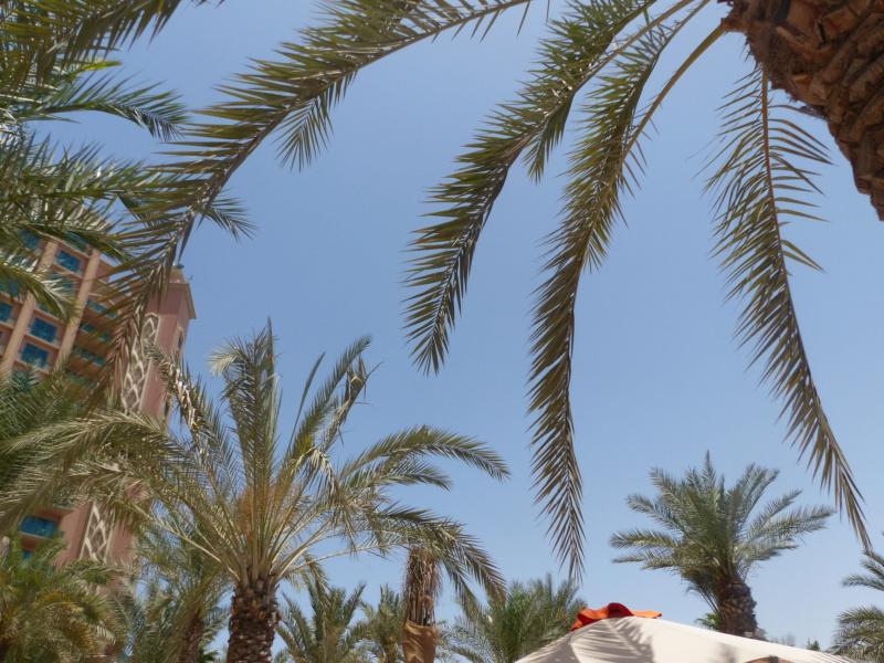 [TR Avril-mai 2018] Un voyage fou à Dubaï : des parcs, de la nourriture, du désert et un hôtel de luxe ! - Page 4 P1070220