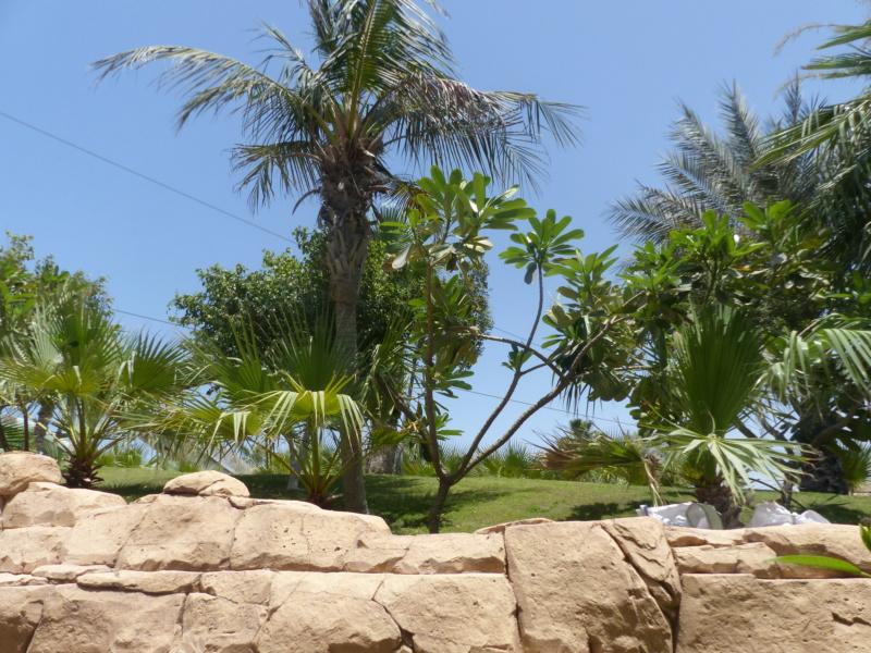 [TR Avril-mai 2018] Un voyage fou à Dubaï : des parcs, de la nourriture, du désert et un hôtel de luxe ! - Page 4 P1070244