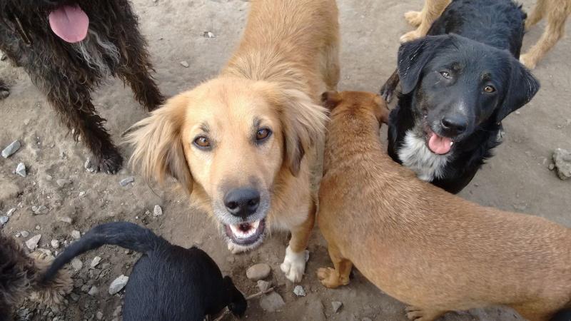 BOUNDASH II, né 2012, 25 kg (BELLA) Pris en charge Association Animals Rescue (Belgique) 07_10_19