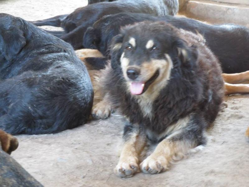 FLOKI, M-X Colley, né 2006, 15 kg - Il est extraordinaire (BELLA) - En FA Takine40 (départ40) 16_02_12