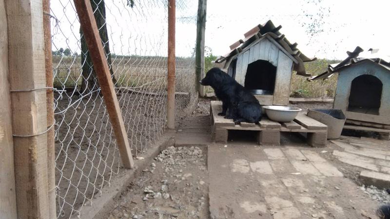 LILIE, F-X, née 2011/2012, 8 kg (BELLA) Prise en charge CCTNA 1_10_295