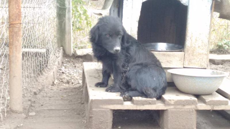 LILIE, F-X, née 2011/2012, 8 kg (BELLA) Prise en charge CCTNA 1_10_296