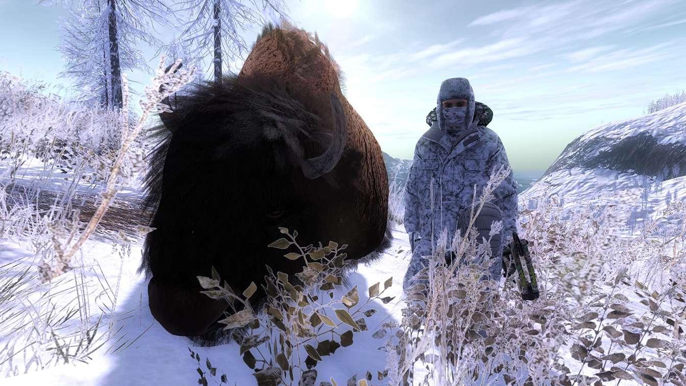 Bison Attack!! Zzz20110