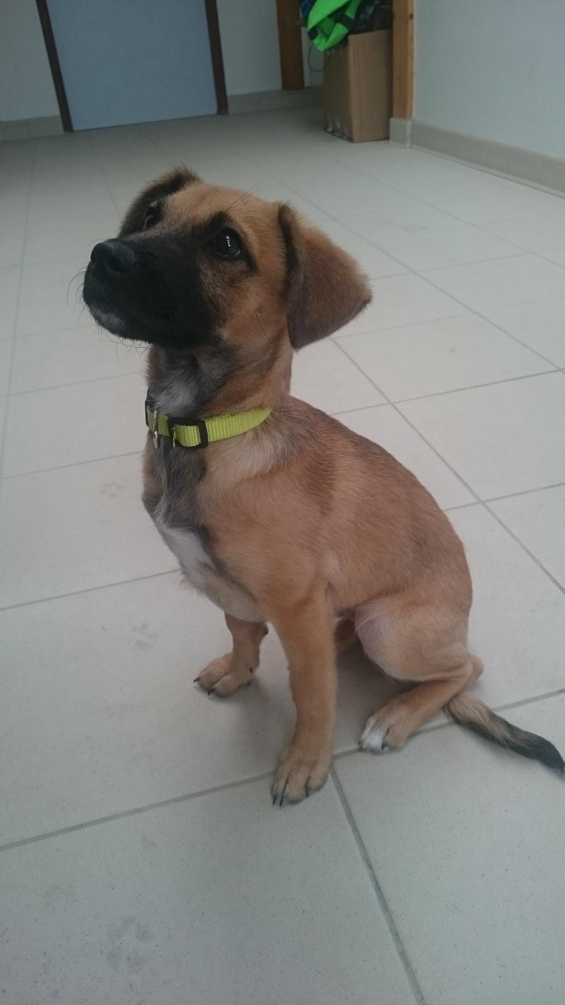[Clos]Visite post adoption (chien) à Vannes pour Lyria Dsc_0010