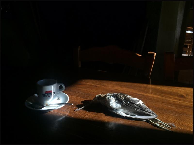 Le Chant du Marais - Page 3 Cafe10