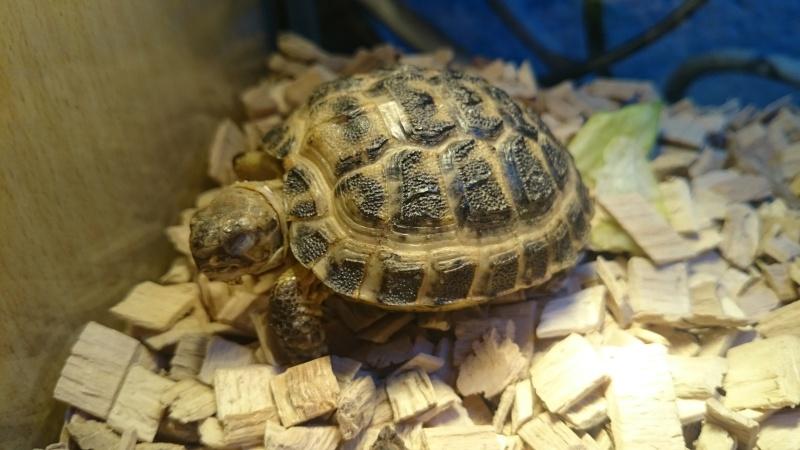 Hibernation tortues Dsc_0111