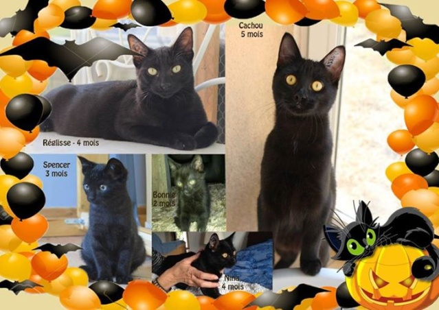 (adopé) REGLISSE, chaton noir (4 mois) (13) 12189710