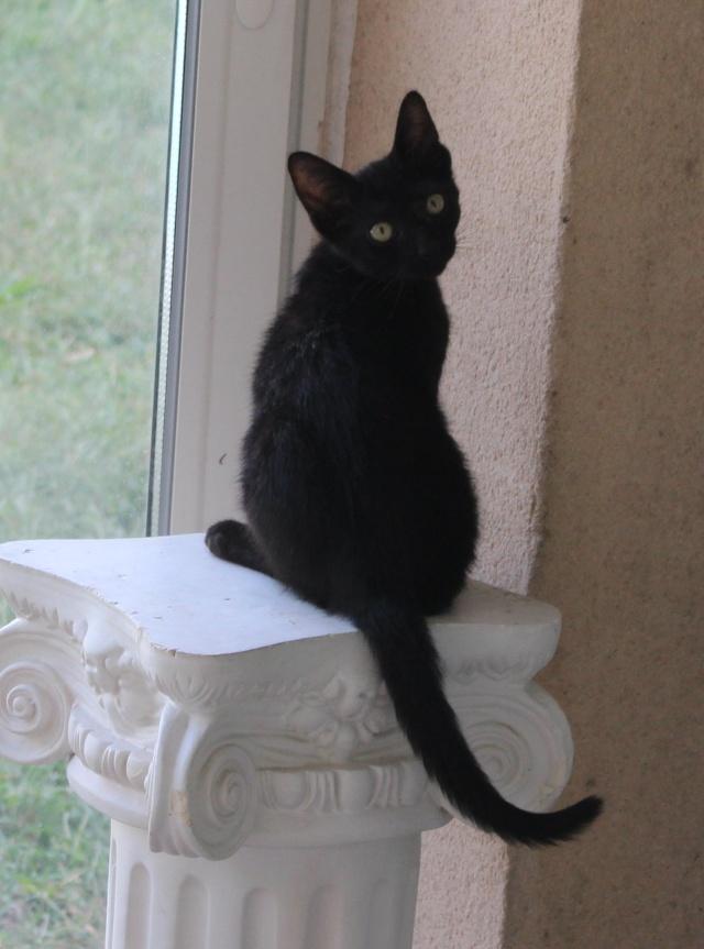 (adopté) Cachou, perle noire de 5 mois (13) Cachou10