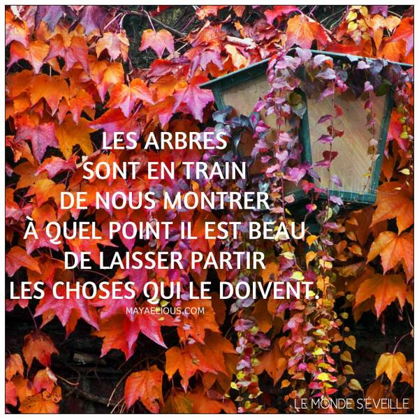 Citations que nous aimons - Page 4 Arbre10