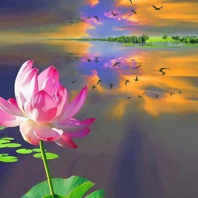 Cours de Sagesse Medita11
