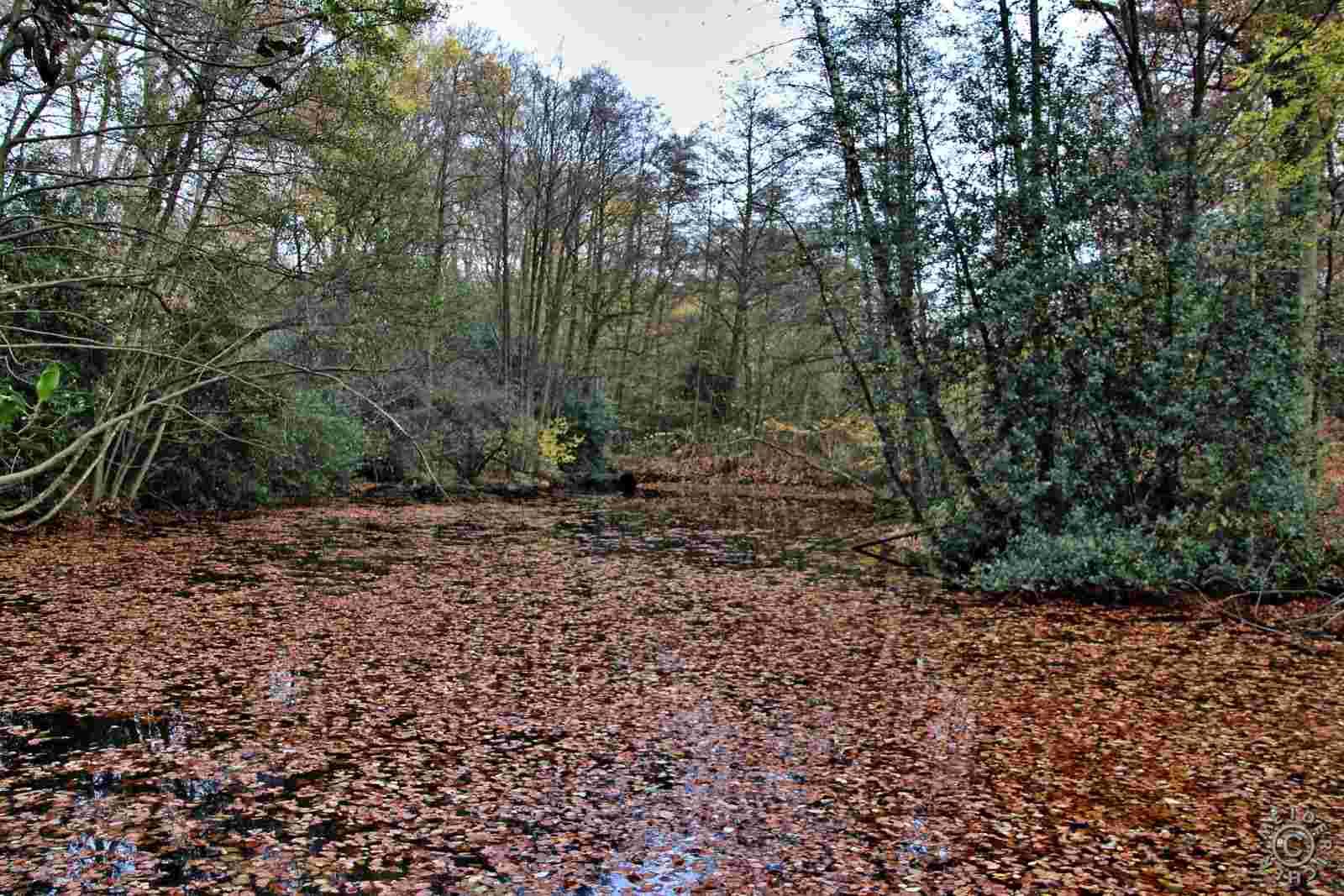 Herbstlicher Spaziergang 1012