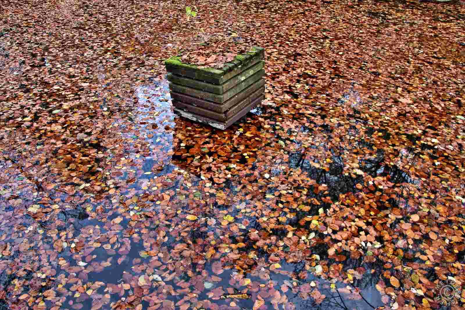 Herbstlicher Spaziergang 1112