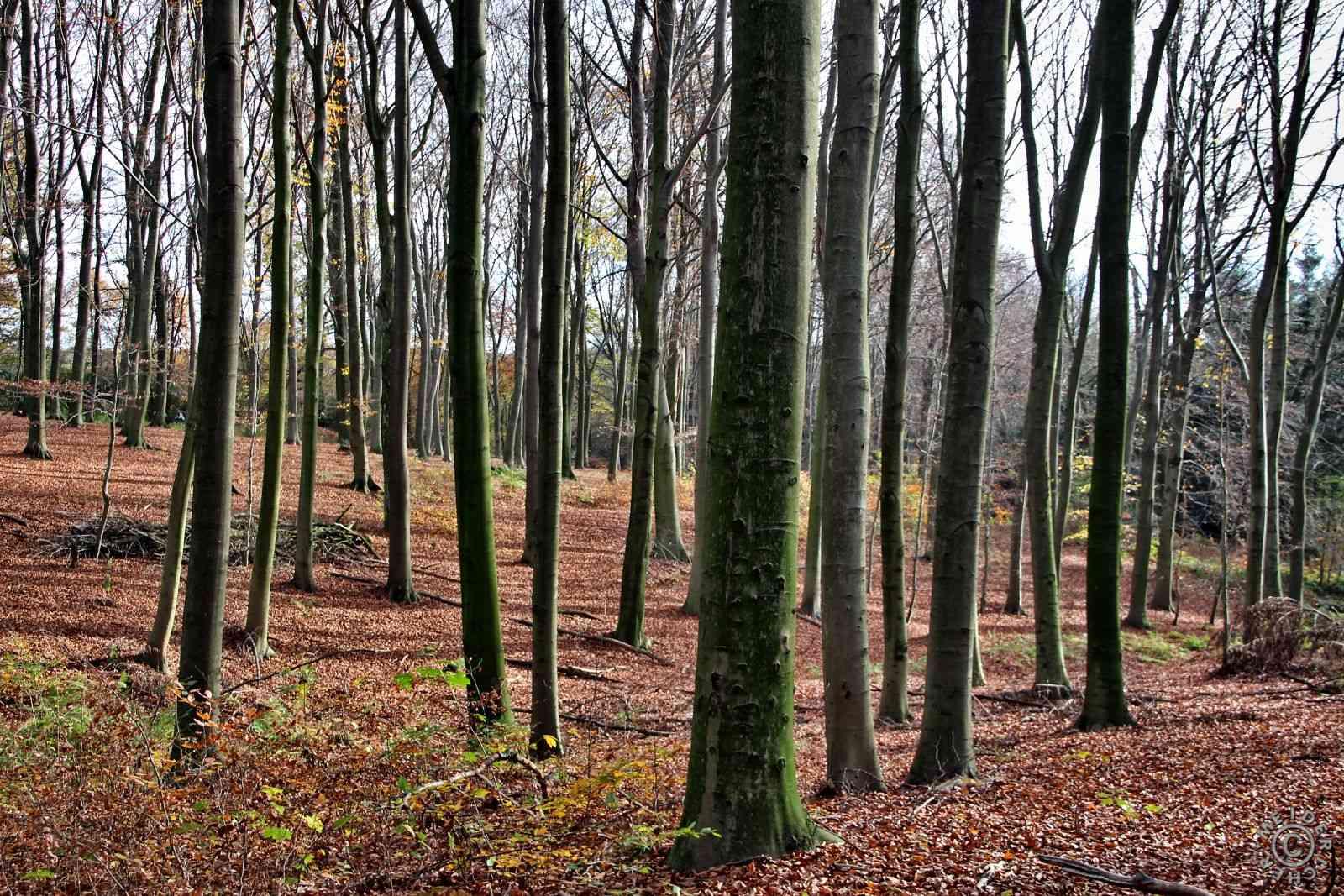 Herbstlicher Spaziergang 117