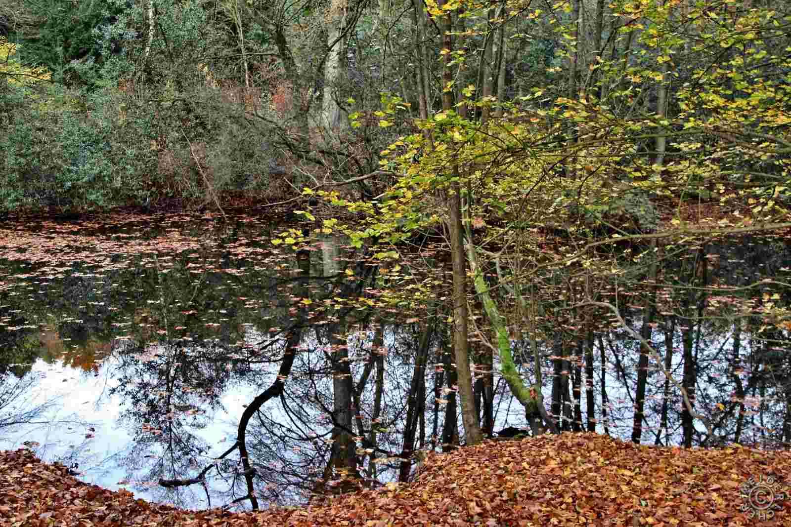 Herbstlicher Spaziergang 1212