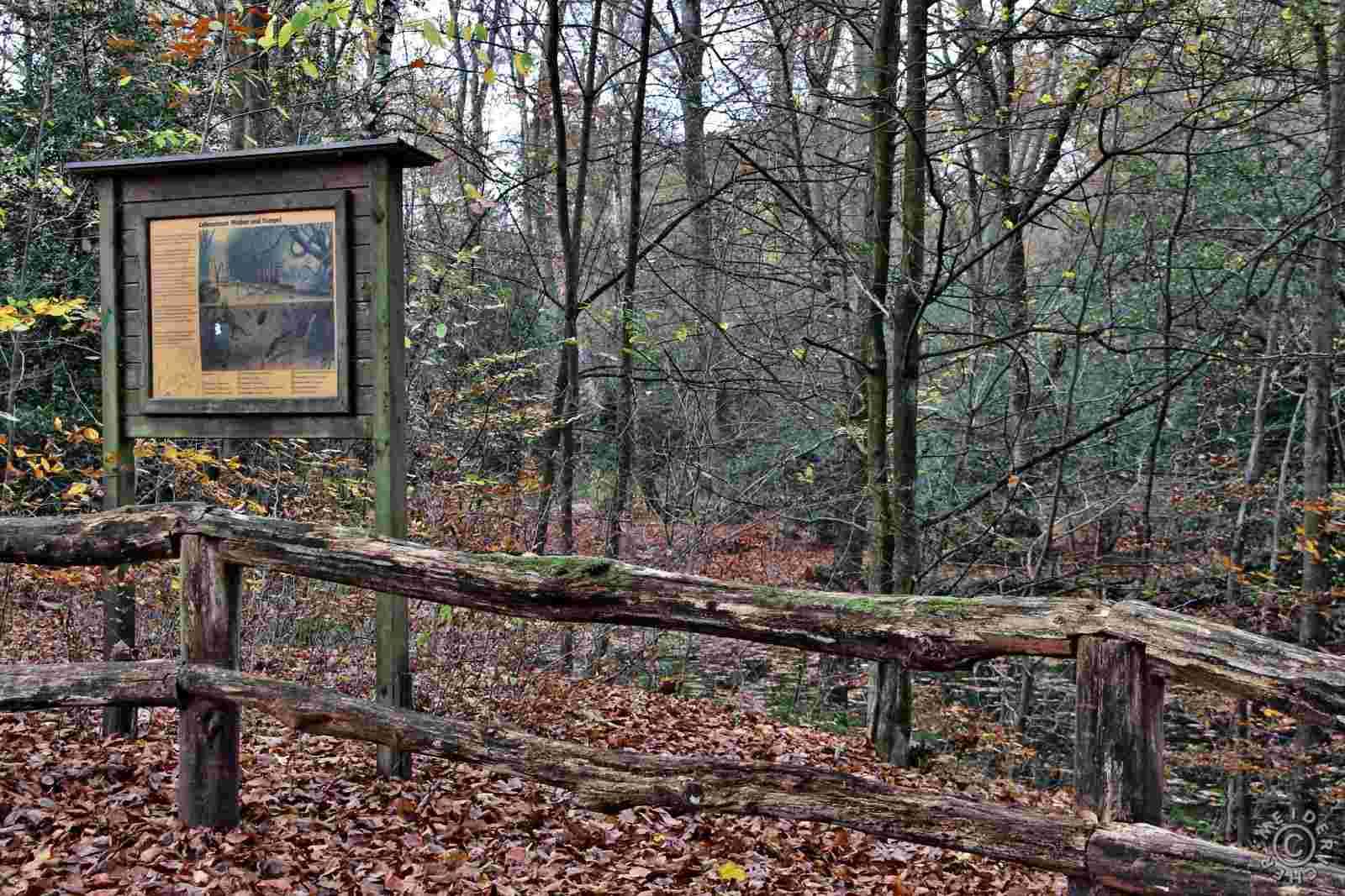 Herbstlicher Spaziergang 1313