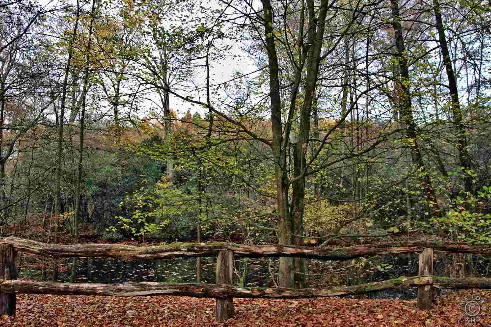 Herbstlicher Spaziergang 1412