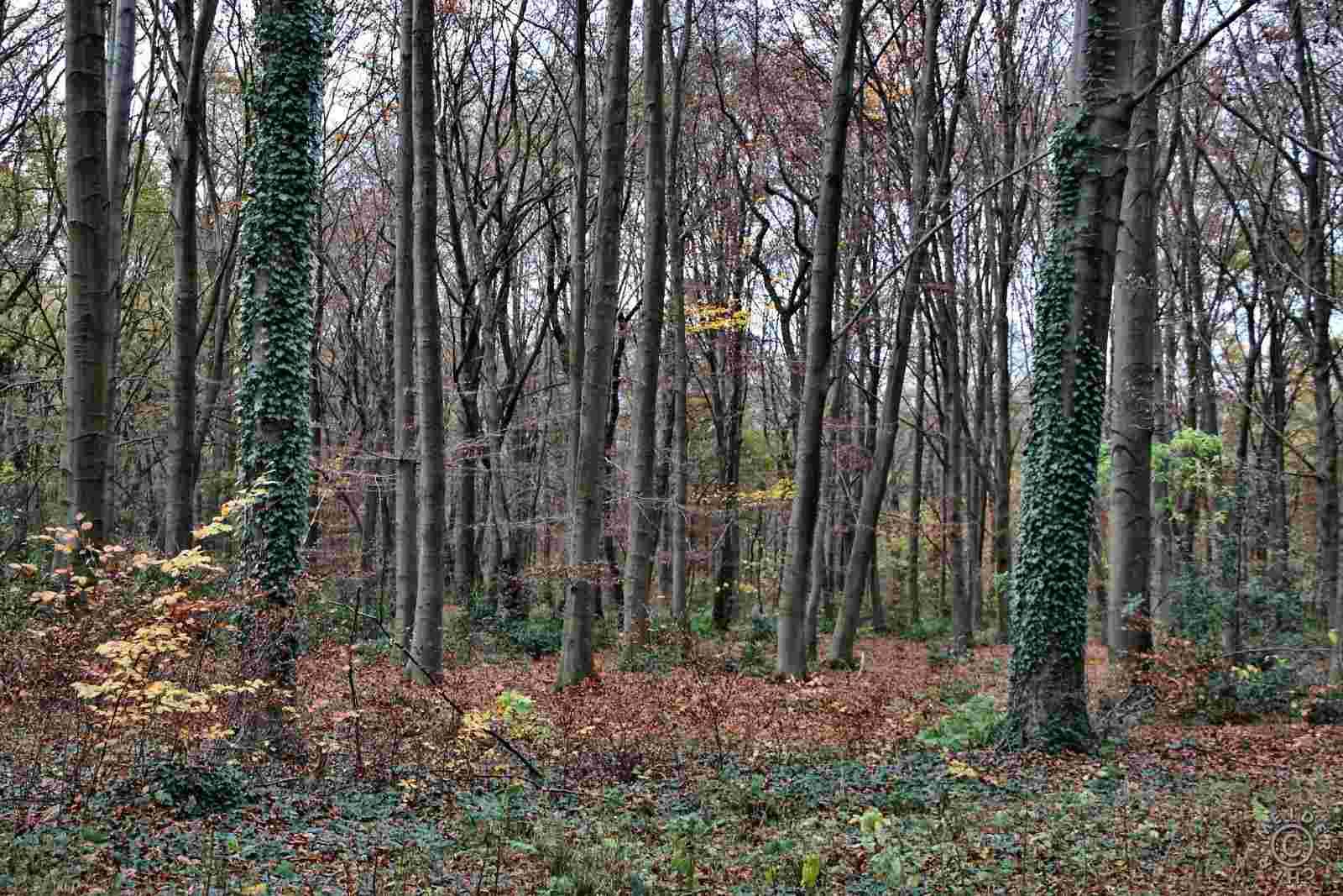Herbstlicher Spaziergang 1612