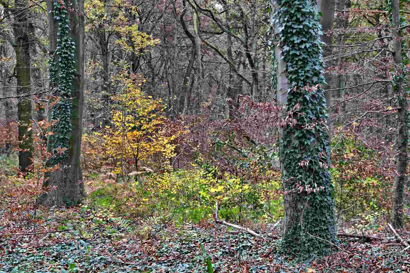 Herbstlicher Spaziergang 1711