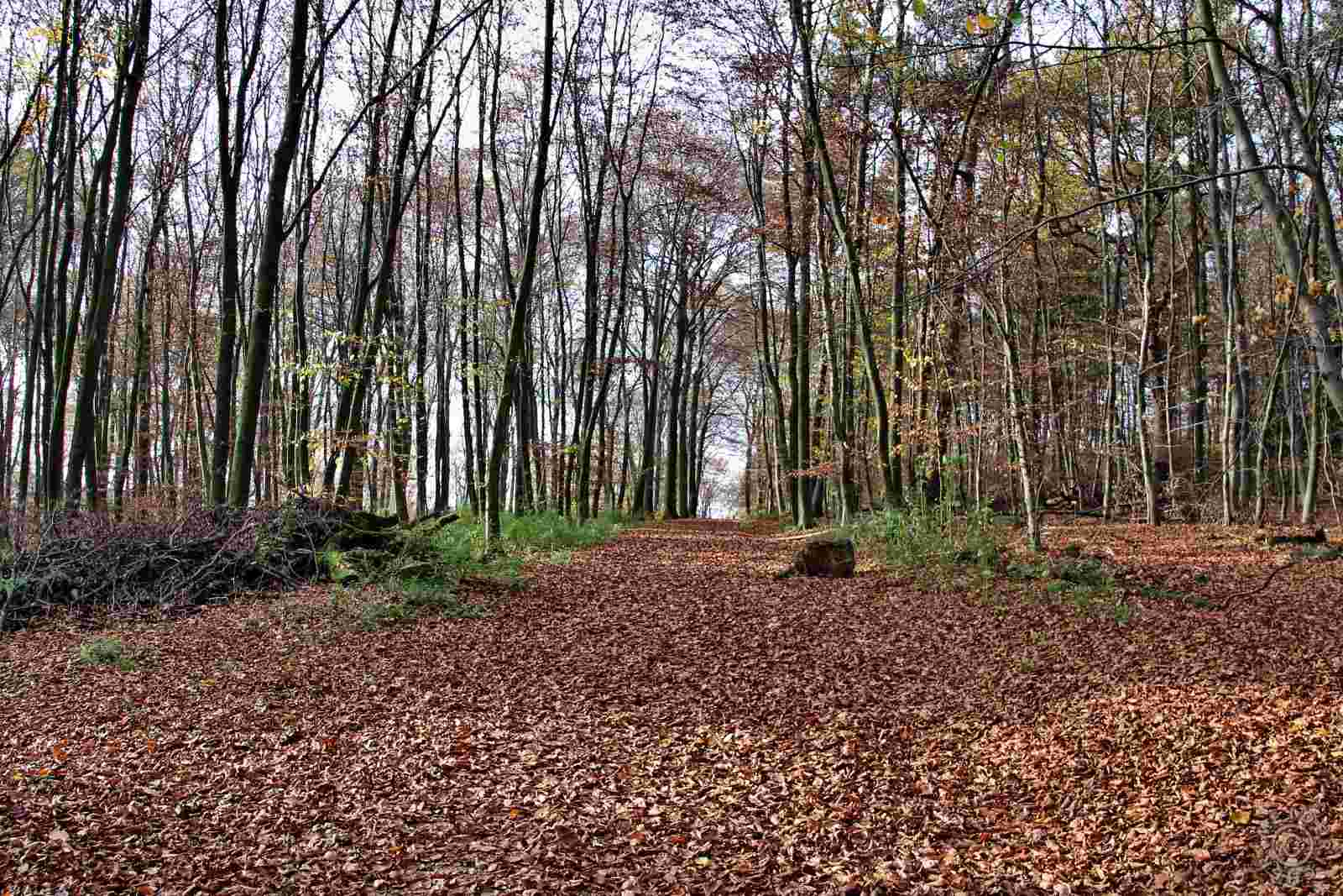 Herbstlicher Spaziergang 216