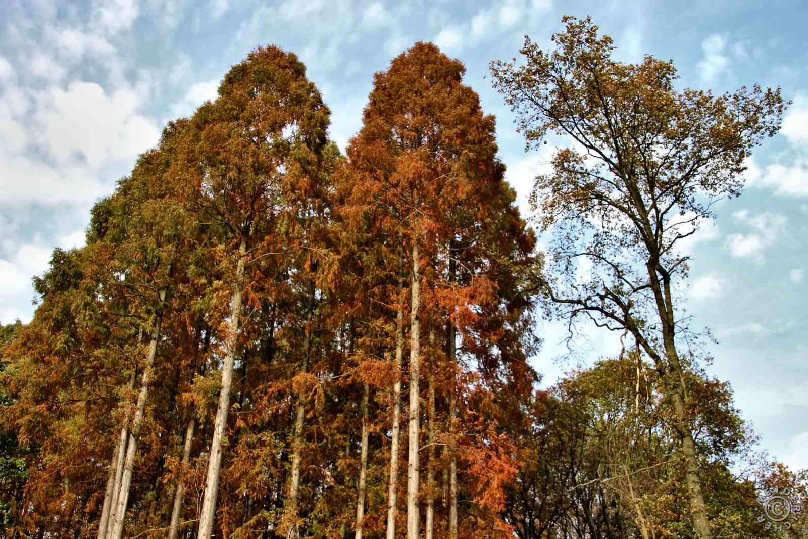 Herbstlicher Spaziergang 317