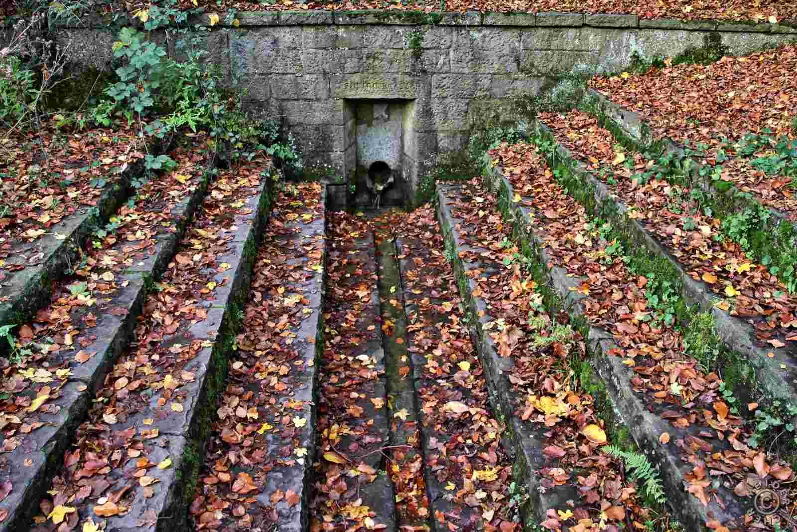Herbstlicher Spaziergang 417