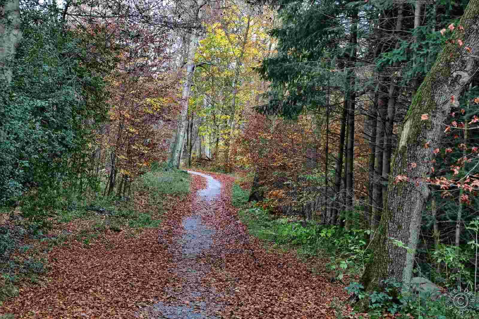 Herbstlicher Spaziergang 814