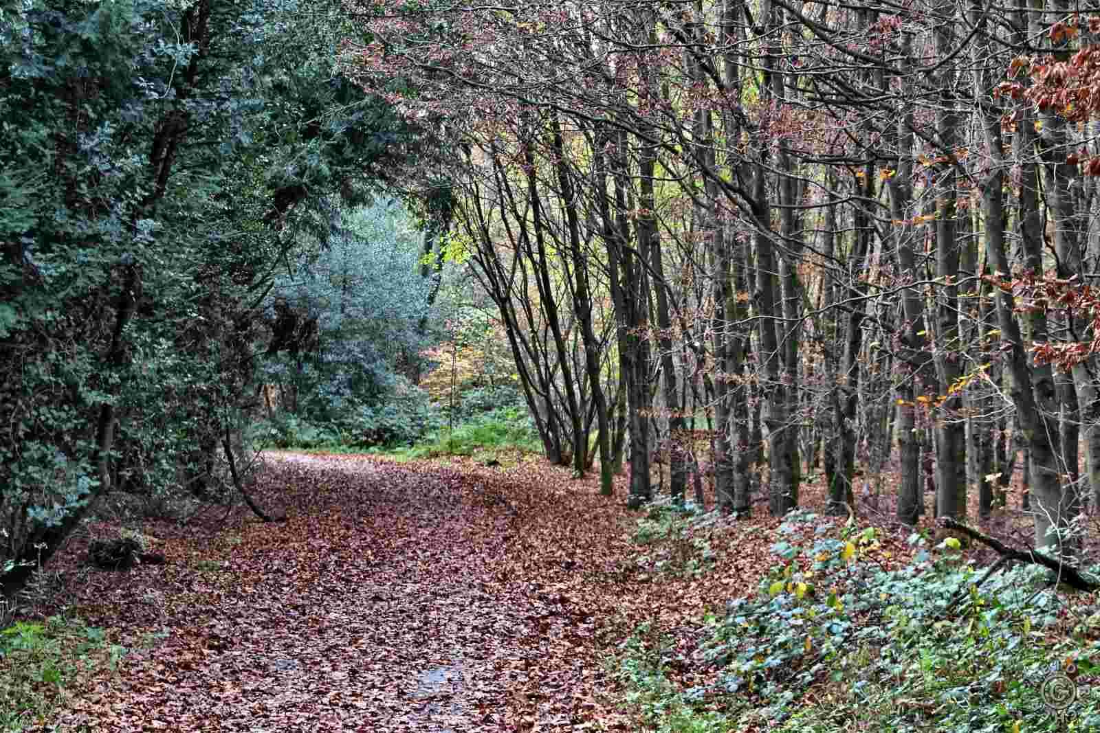 Herbstlicher Spaziergang 914
