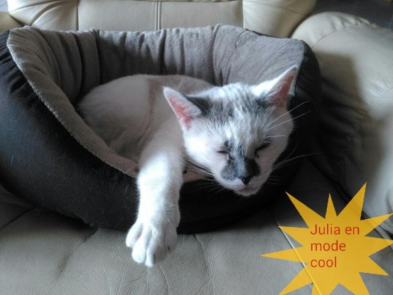 JULIA, chatte croisée siamoise blanc crème & fauve, née en janvier 2014 Img_2014