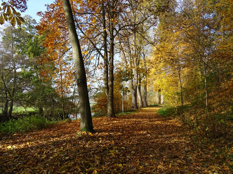 Herbst  - Seite 2 Herbst19