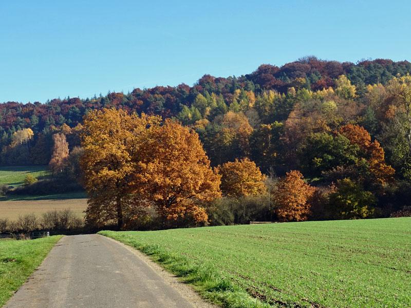 Herbst  - Seite 2 Herbst25