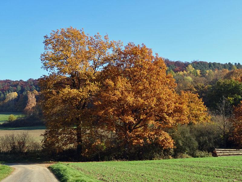 Herbst  - Seite 2 Herbst26
