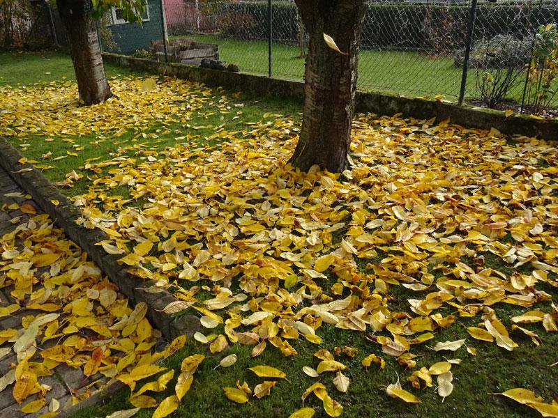 Herbst  - Seite 2 Nov510