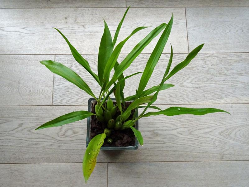 Orchideen in Glasvasen 4 (SGK) - Seite 2 Ochrac10