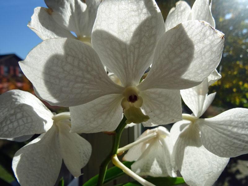 Orchideen in Glasvasen 4 (SGK) - Seite 3 Sonne10